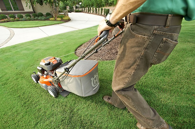 gardener mows lawn in garden
