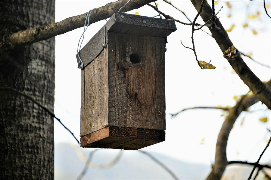 Bird nesting box hanging in a tree