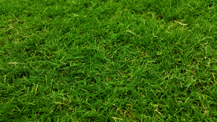 Close up of green grass turf lawn